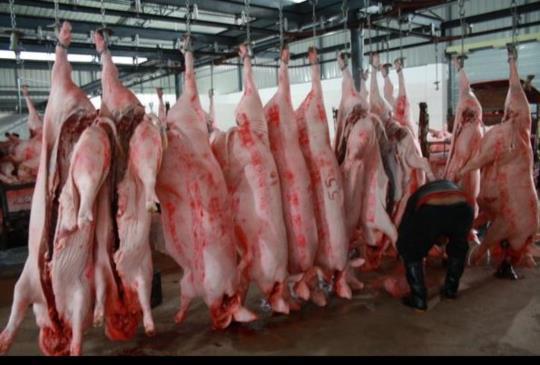 背包客Ora分享 >澳洲打工「肉場」經驗談