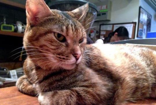 【老貓照護】老年疾病之一 - 甲狀腺機能亢進