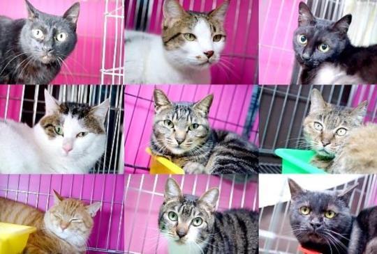 【好想有個家】飼主重病,9個貓孩頓失依靠