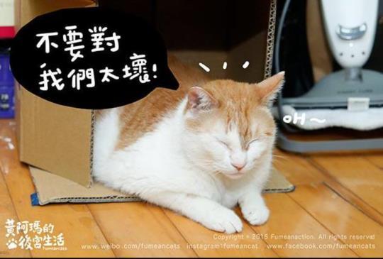 表演藝術能讓「傷害動物」正當化嗎?關於八點檔遭控虐待貓咪事件。