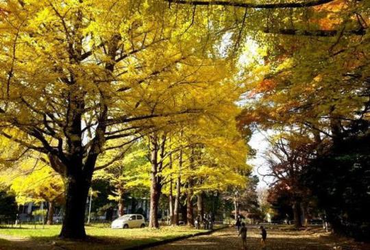 【北海道】札幌必遊的魅力景點大集合