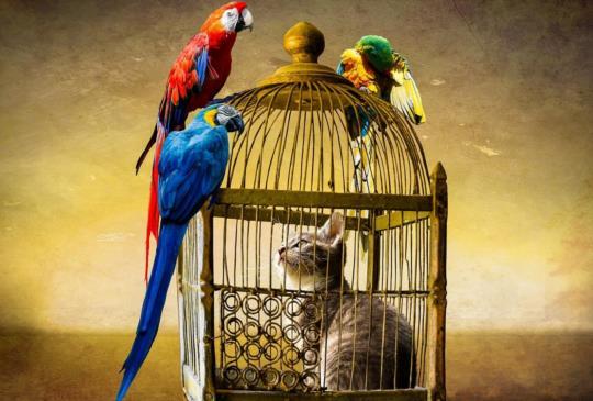 貓的「報恩」好感人!?4大妙方避免鳥兒等動物無辜受害