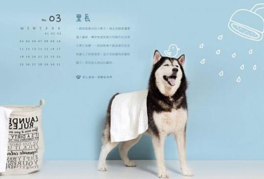 2019 動物公益桌曆/掛曆/記事本懶人包