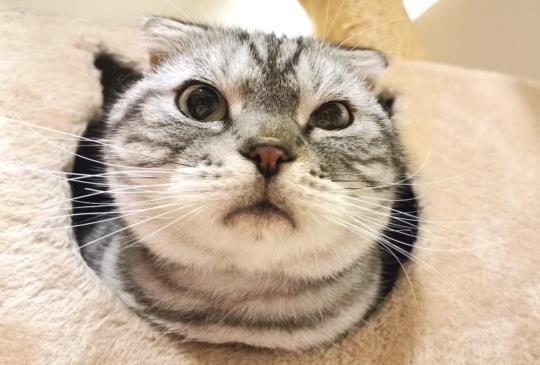 貓咪之七大不可思議