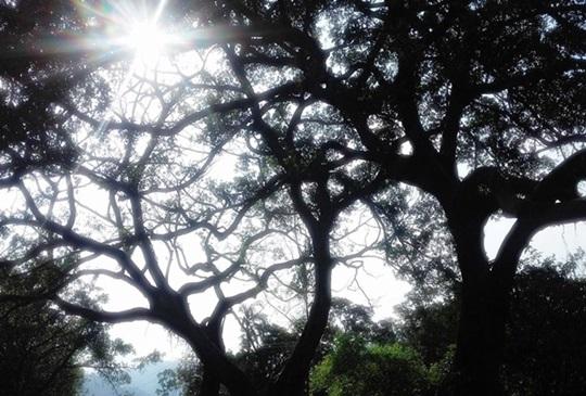 一登南港小百岳【更寮步道+森林小學】: 自在半日小旅行