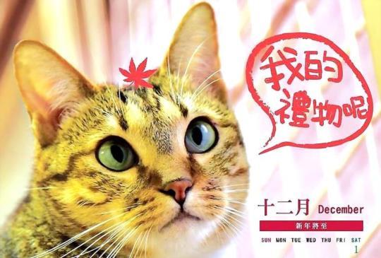 2018 各家貓狗公益桌曆懶人包(10/23更新)