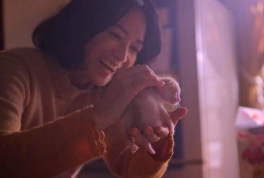 關於家, 感受生命的溫度,從【衣櫃裡的貓】開始