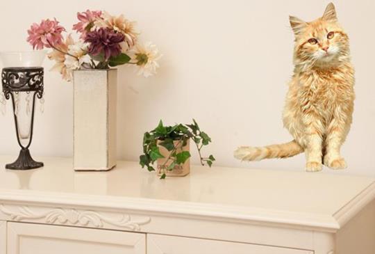 【生活無時無刻都想要有貓星人‧貓咪壁貼正夯】~日式壁貼特搜