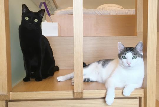 貓咪保母到府代養系列│過年期間的注意事項