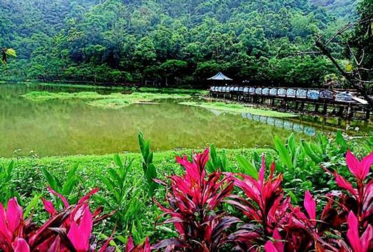 【南投】落入凡間的秘境:埔里小西湖-鯉魚潭