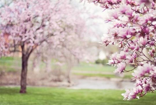 必看|三方向讓你在春分順利改運旺旺旺