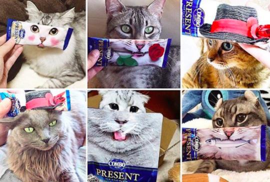 日本近期最盛行的變裝秀,秀出寵物們最可愛的一面。