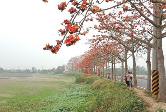 【全球15大最美花海漫步道之一!林初埤木棉花道連日本人都愛】