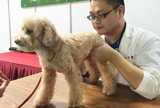 帶寵物看中獸醫一定要問的10個問題!