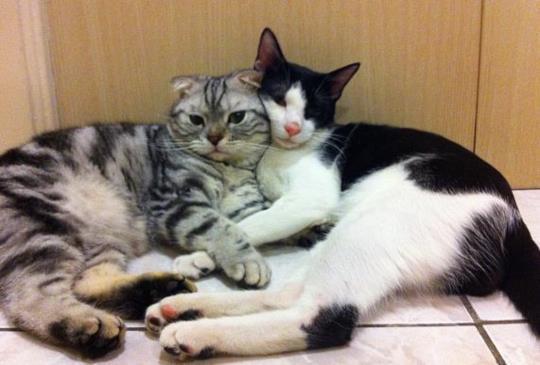 懷孕不能養貓!?別再相信沒有根據的傳說了