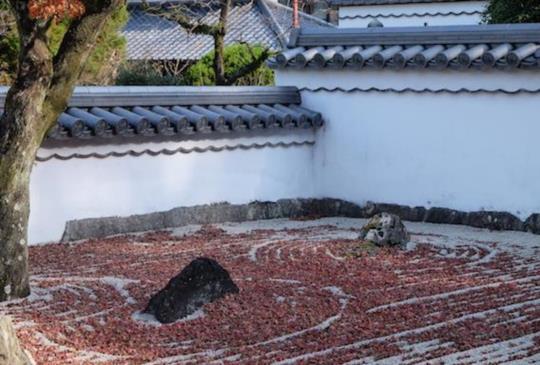 【日本福岡】秋旅行,追紅葉,看相撲,賞美景