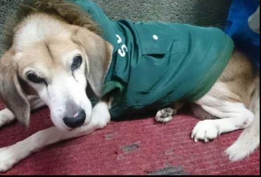 結紮不完全,後患無窮-高齡犬妮妮之乳腺瘤抗戰史