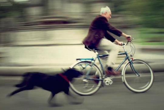 狗狗追車很煩人?沒關係,現在有妙招讓這些狗狗乖乖不追車!