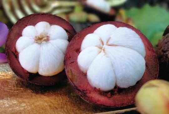 【山竹、人心果,這八樣美味的特色水果你都吃過了嗎?】~水果特搜