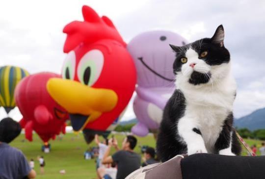 『台東熱氣球嘉年華啟航囉』邊看邊玩邊享受,鹿鳴溫泉酒店寵物房絕不容錯過!