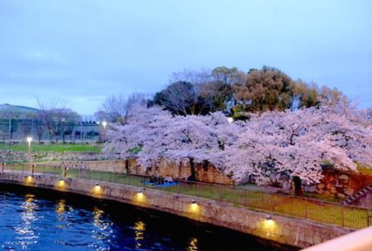 【大阪】日本關西的粉色世界:櫻花滿開中
