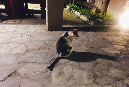 【真的是模仿貓!】貓咪常見五大模仿人類的行為