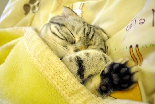 【百變貓咪秀】療癒系貓咪睡姿大搜奇