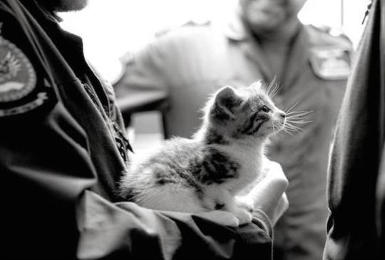 一段可愛小貓與帥哥飛行員的奇妙相遇!任誰都會感到融化的配對!