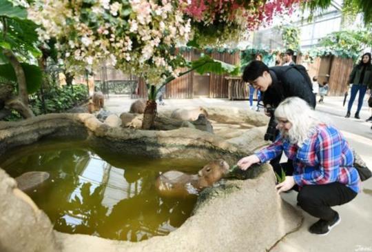 回歸自然的放鬆體驗,親子關西旅行首選『神戶動物王國』