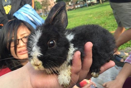 【兔版即刻救援】音悅的故事