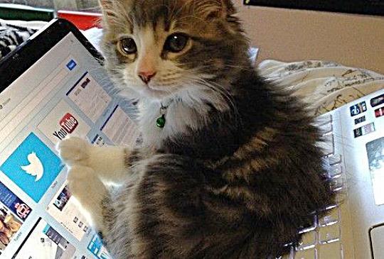【貓咪踩過我的鍵盤】電腦一直說話怎麼辦?