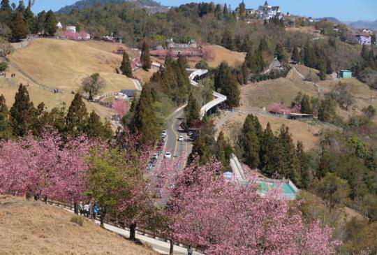 【南投。清境農場】春暖花開好時節,老少咸宜遊清境!