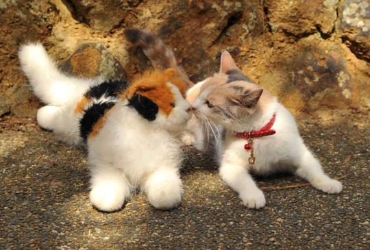 用毛小孩找回心裡柔軟的角落《老師與流浪貓》