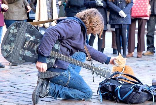 《遇見街貓Bob》在無奈的人生中,遇見那一點微弱而溫暖的曙光