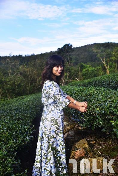 茶園2.jpg