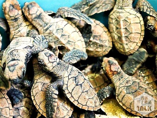 03 海龜.jpg