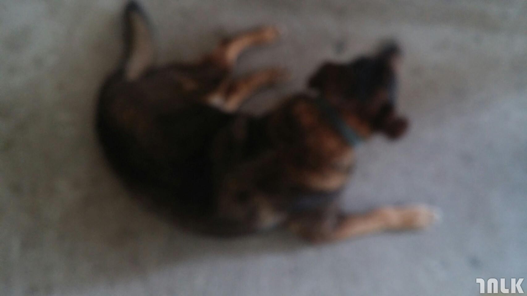 宠物摄影入门 拍宠物写真集不求人
