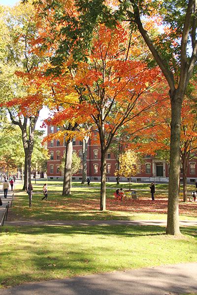 Harvard autumn.jpg