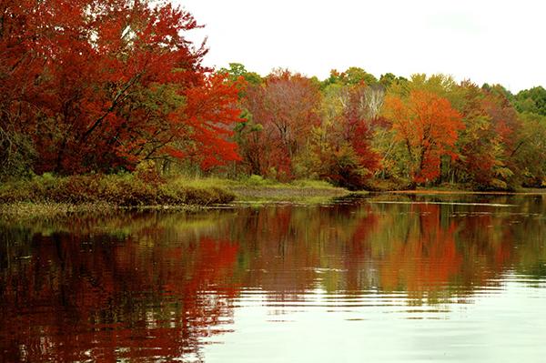 Vermont reflactive foliage.jpg