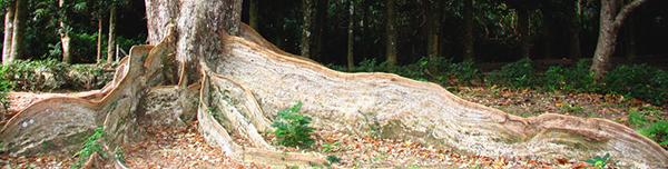 墾丁森林.jpg