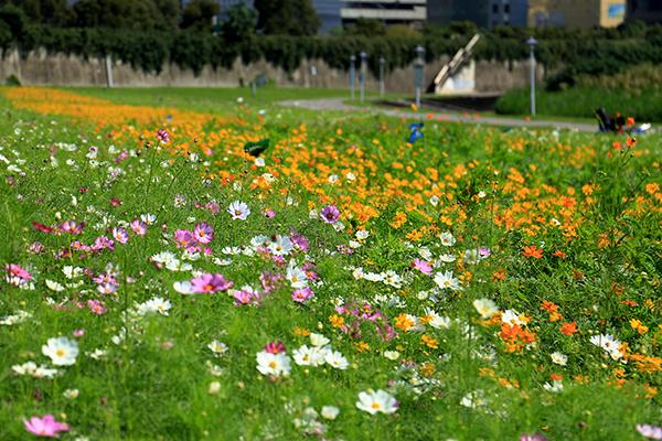 台北美堤河濱公園-1.jpg