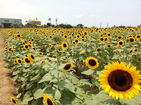向陽農場.jpg