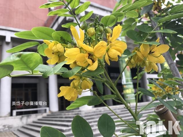 中山大學4.JPG