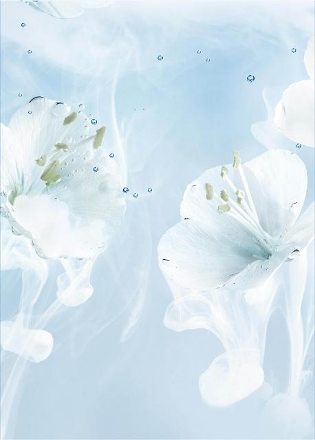 L'OCCITANE 白皇后系列佛羅倫斯鳶尾花.jpg
