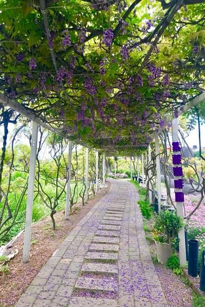 紫藤咖啡園-1.jpg