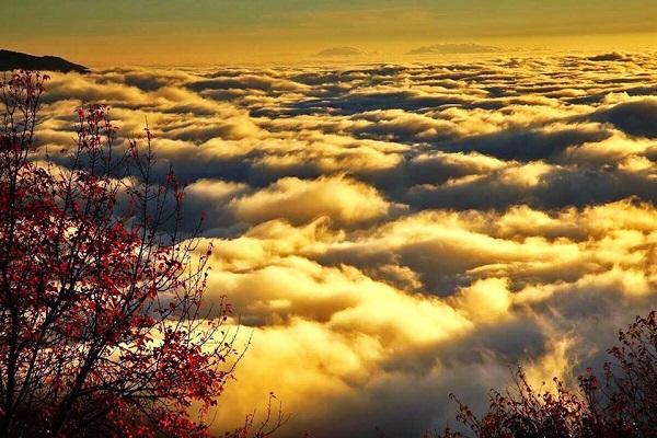 阿里山國家森林遊樂區-1.jpg