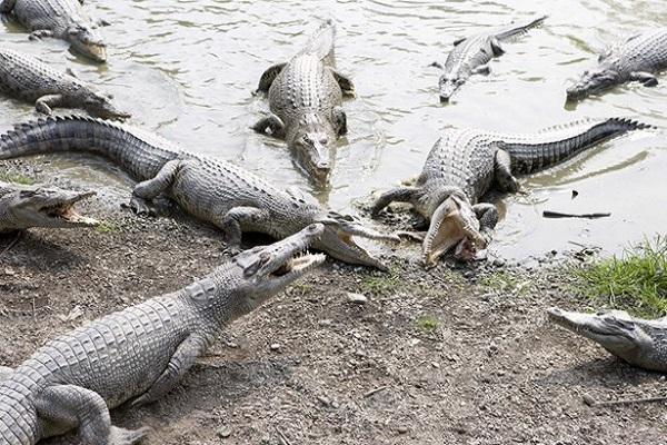 不一樣鱷魚生態農場.jpg