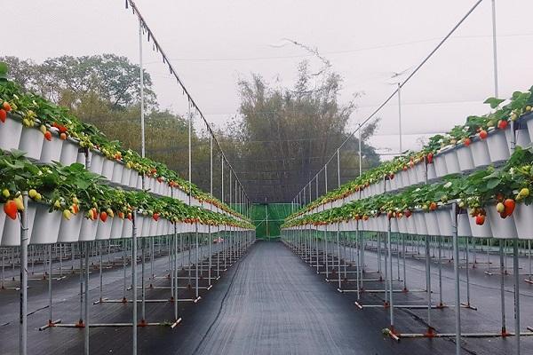 長鑫莓果農園-1.jpg