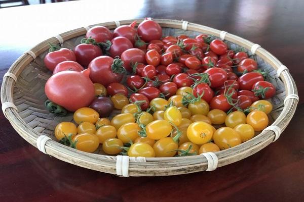 威榮的豆漿番茄窩-1.jpg