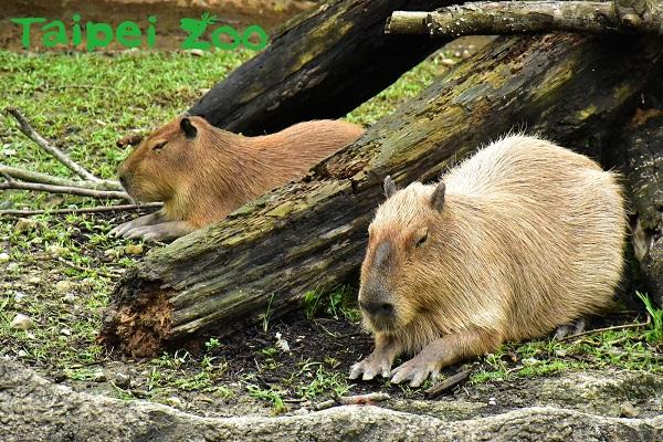 台北市立動物園.jpg
